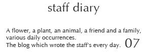 staff diary