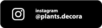 instagram decora plants
